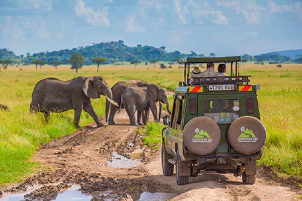 Сафари-Танзания