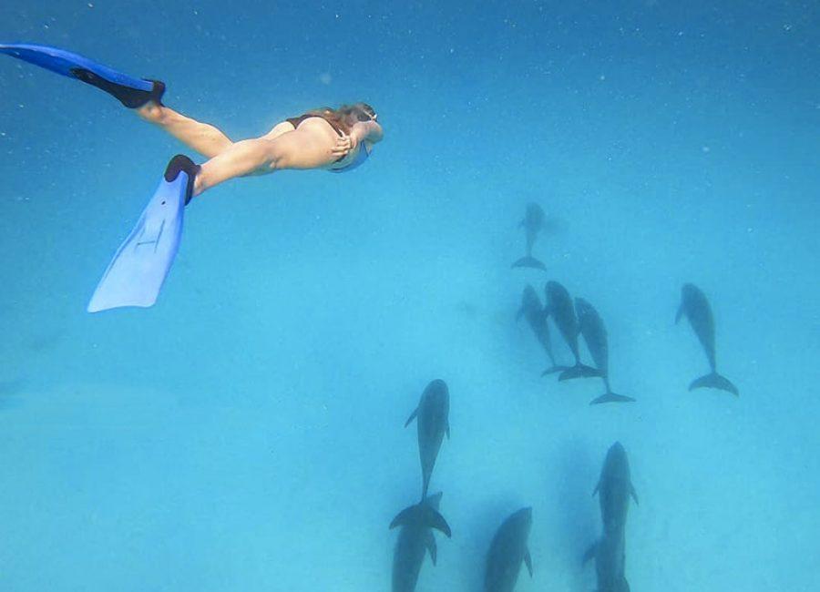 Занзибар дельфины