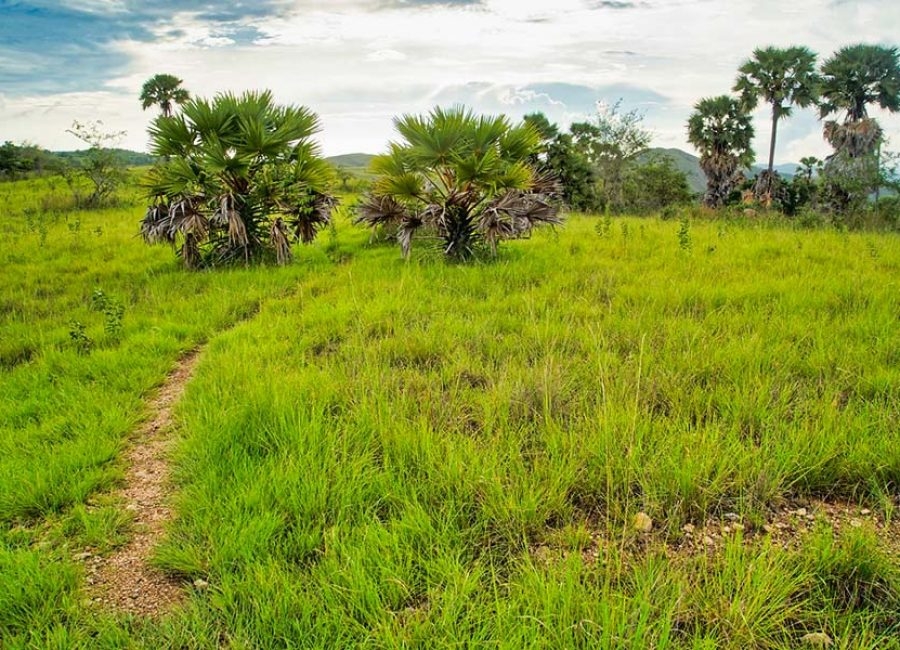 Habitats, Indonйsie, Rinca, Trips