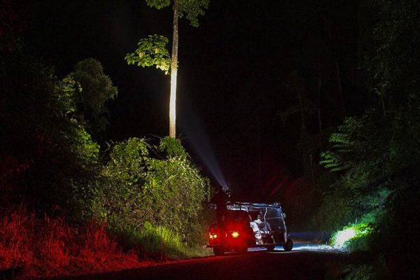 2a_borneo_rainforest_lodge_night_drive_amazing_borneo_tours