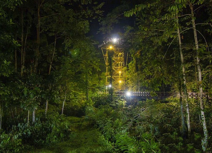 3e_kawag_danum_valley_observation_tower_amazing_borneo_tours
