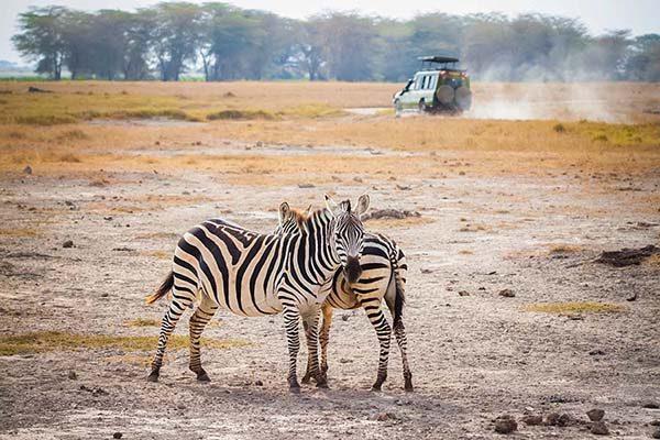 Amboseli00-2