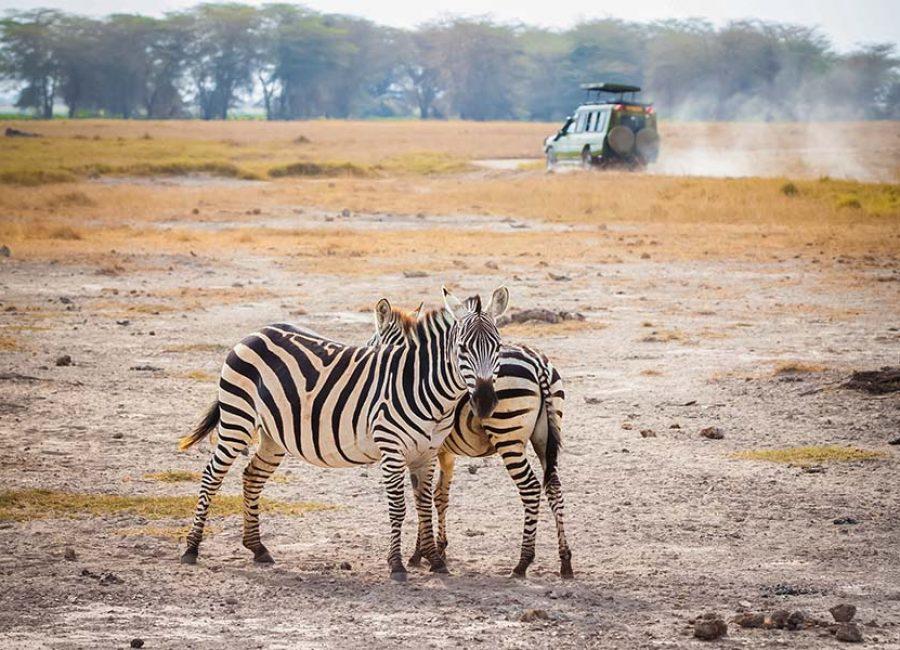 Amboseli00