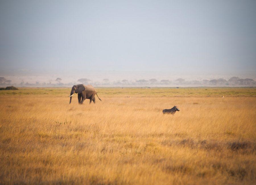 Amboseli000jpg