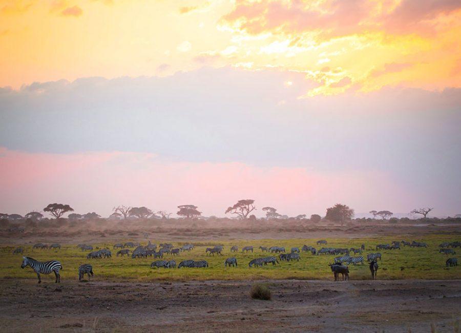 Amboseli01