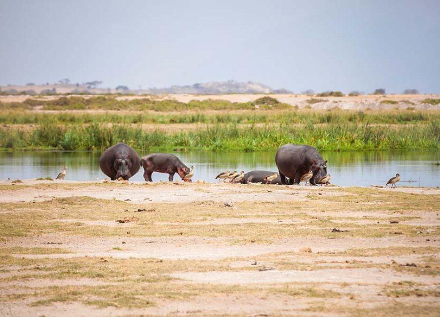 Amboseli02