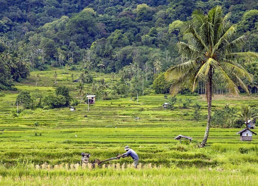 Maninjau