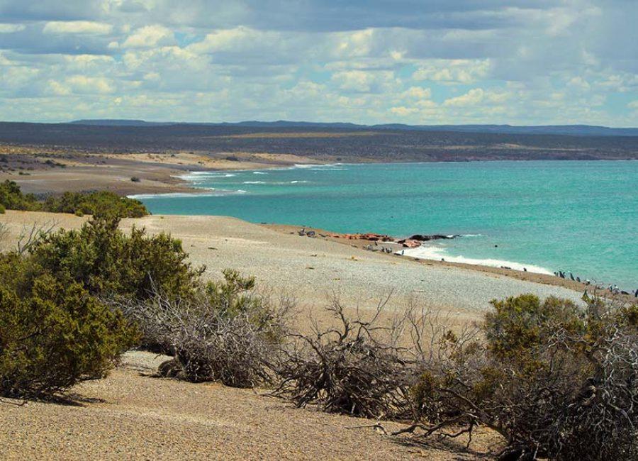 Punta Tombo3