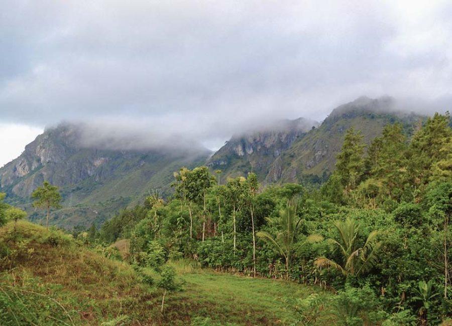 Toraja6