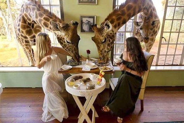 acj-3005-giraaffe-manor-kenya-7