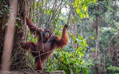 Danum Valley- жемчужина Борнео