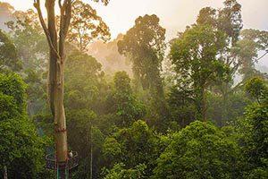 Danum Valley-жемчужина Борнео