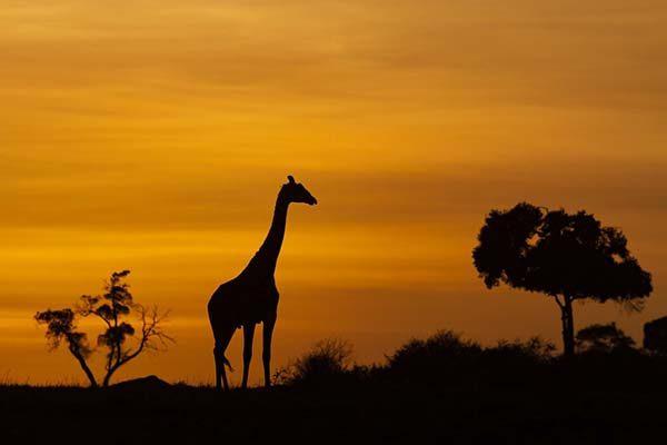 masai-mara22