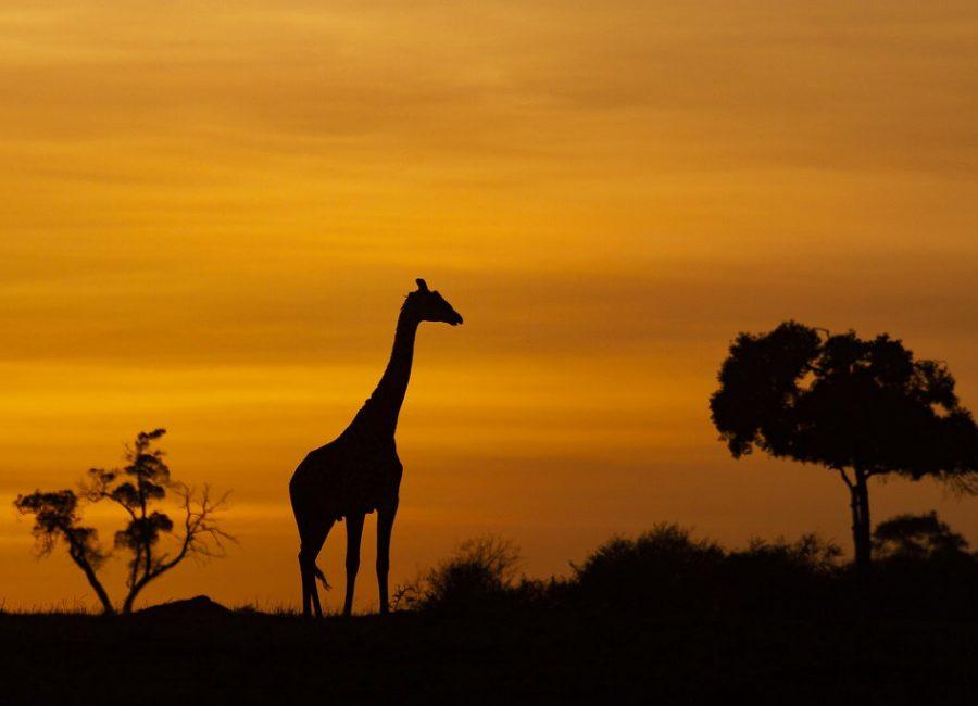 masai mara22