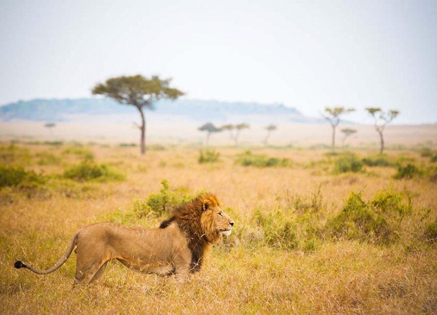 masai mara3