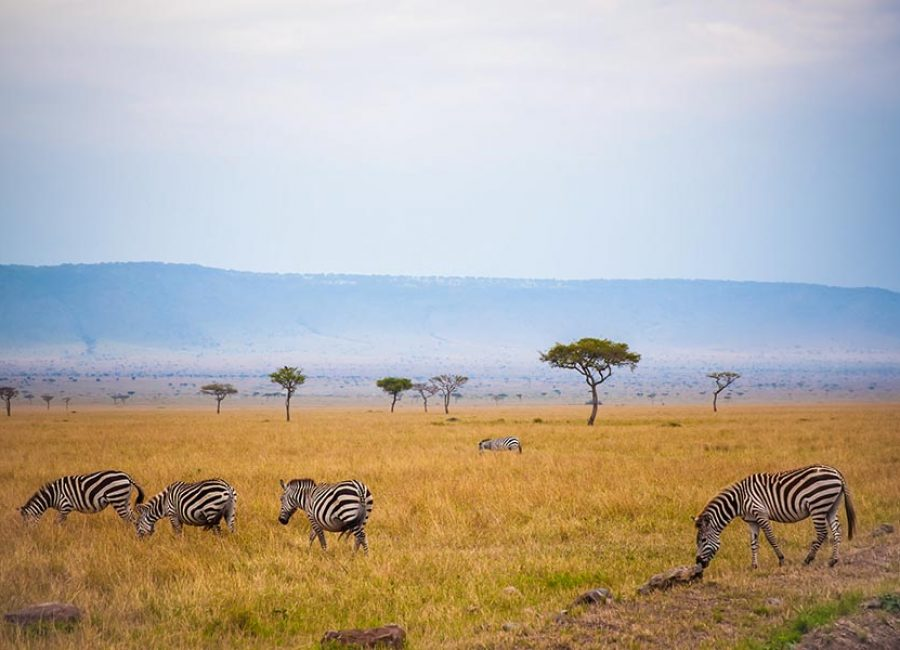 masai mara43
