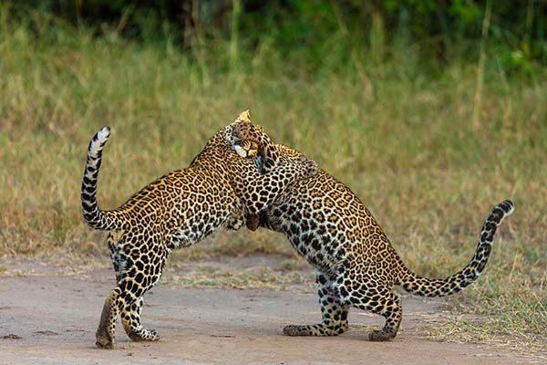 masai-mara65