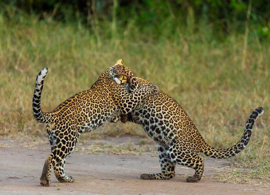 masai mara65