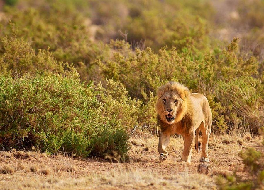 masai mara9